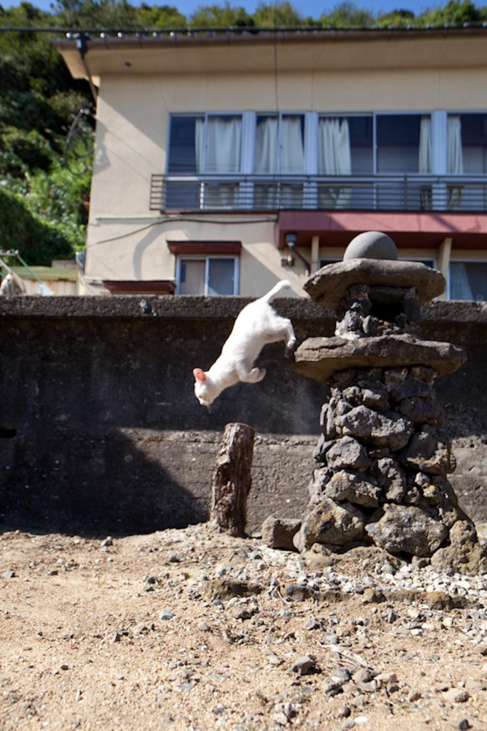 Фото 18 - Кошачий рай в Японии