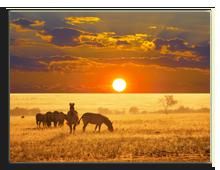 Кения. Масаи Мара. Фото kamchatka- Depositphotos