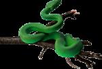 змеи  (14).png