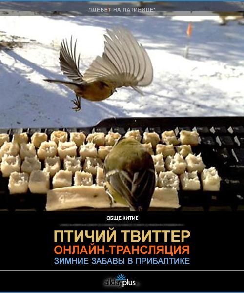Птичий твиттер. Зимние забавы