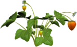 DBA STRAWBERRY PLANT 5.png