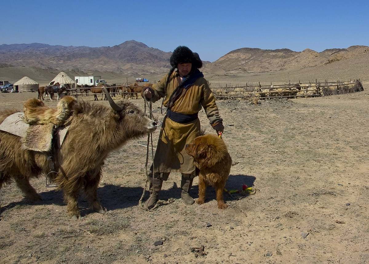 13. «Это был полезный и интересный опыт не только для собак, но и для нас, — вспоминают в питомнике.