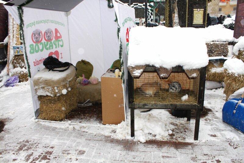 Кролики в мини-зоопарке на Крещатике