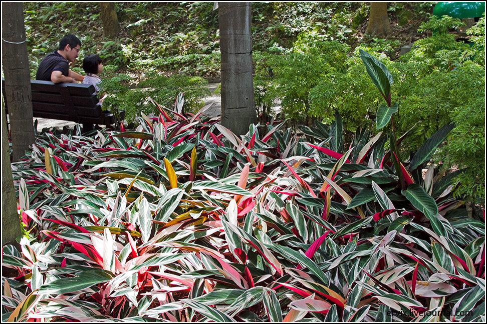 Гонконг, часть 2. Городские парки