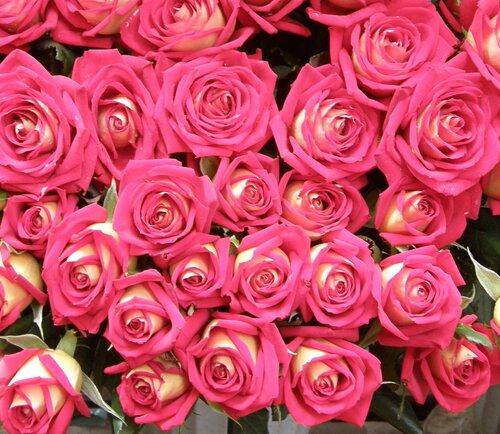 миллион, миллион, миллион алых роз...