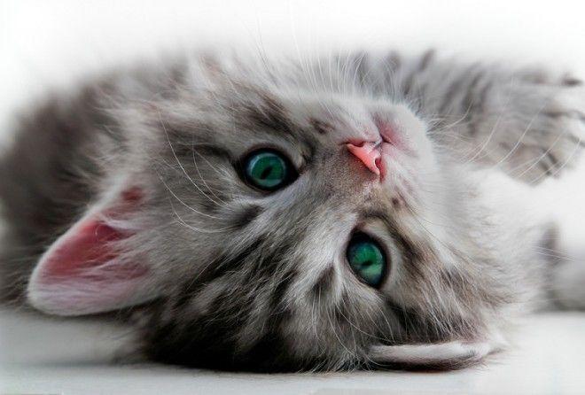 Ты всё еще пускаешь кота к себе в кровать? Тогда читай скорее! (14 фото)