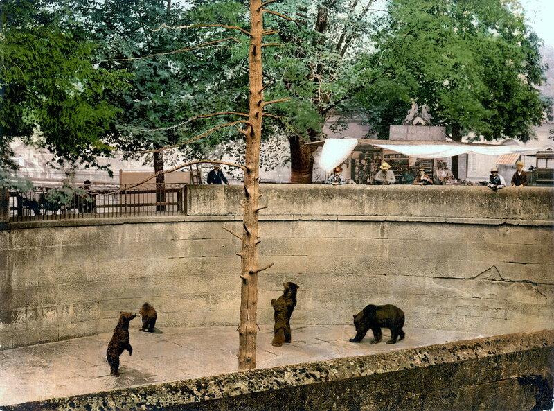 Медвежья яма в конце XIX века