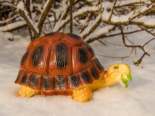 Черепаха на снегу !