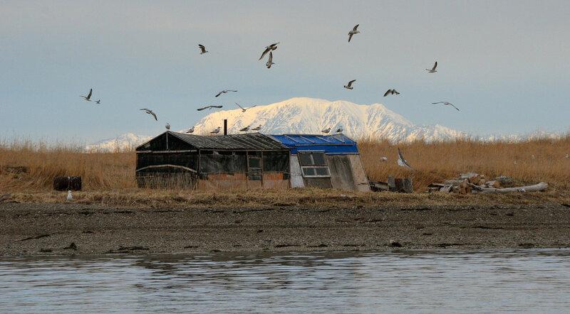 чайки над бараком.jpg