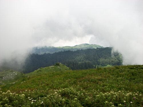 Альпийские луга 5