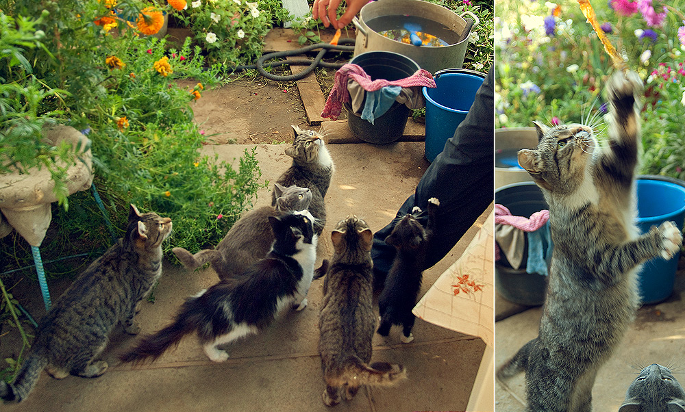 шесть кошек в одном доме