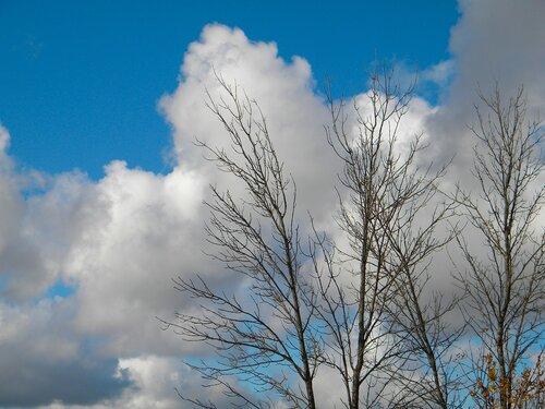 Когда нет листьев, одевают облака