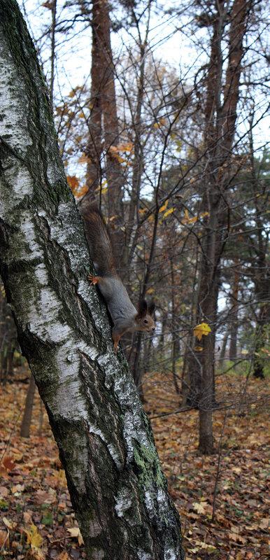 Белочка на дереве