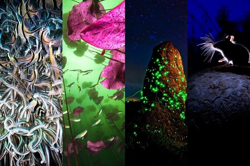 Победители конкурса фотографий дикой природы 0 12f897 4e4636ed orig