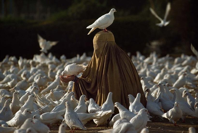 Стив Маккарри: гениальные снимки гениального фотографа 0 e3adb 2493058 orig