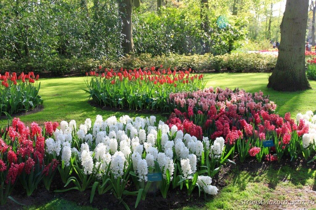 Голландия, парк тюльпанов Кёкенхоф