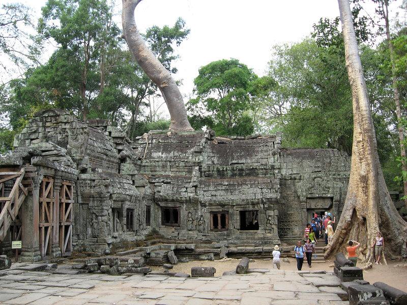 Храм Та ПРом в Камбодже .Тетрамелес -баньян