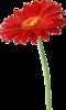 png, цветы, клипарт