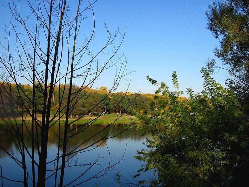 Ветви у пруда