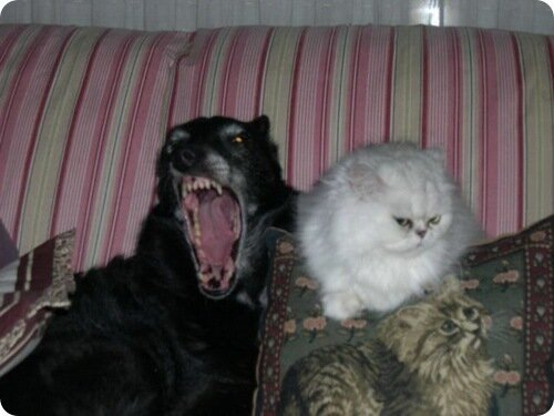 На моей подушке поднимает ушки,Скалит зубки страшный зверь.Поселился здесь теперь!