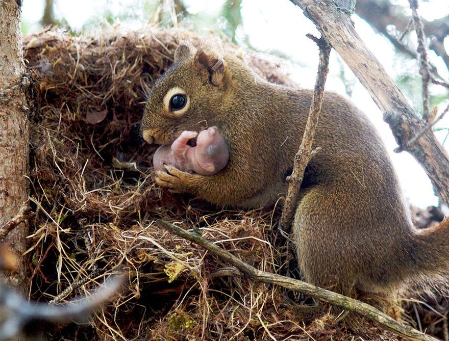 pensivesquirrel.wordpress.com