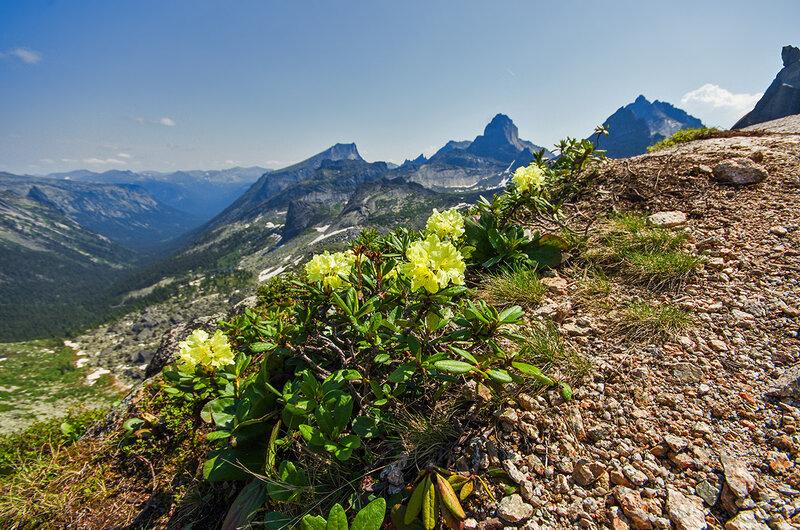 Цветы на перевале