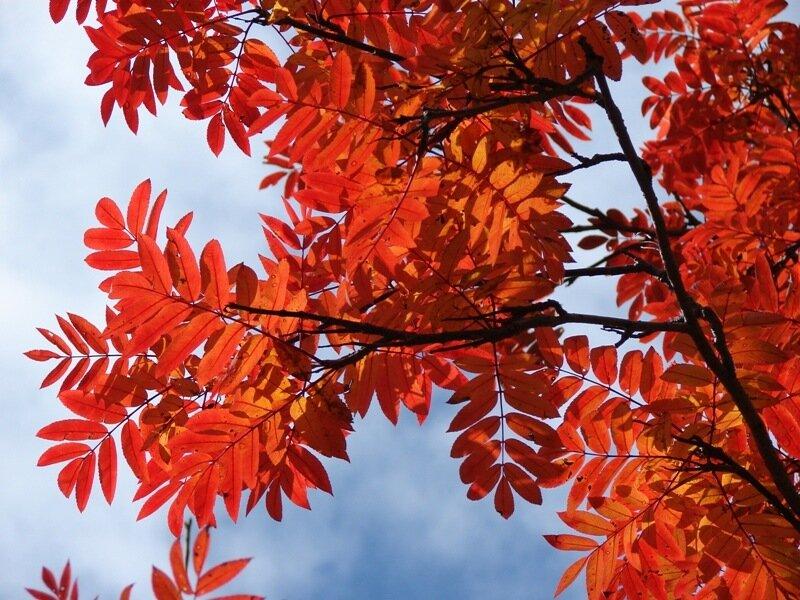 Осыпается весь наш бедный сад, Листья пожелтевшие по ветру летят; Лишь вдали красуются, там, на дне долин, Кисти...