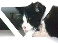 фото застрявшего кота