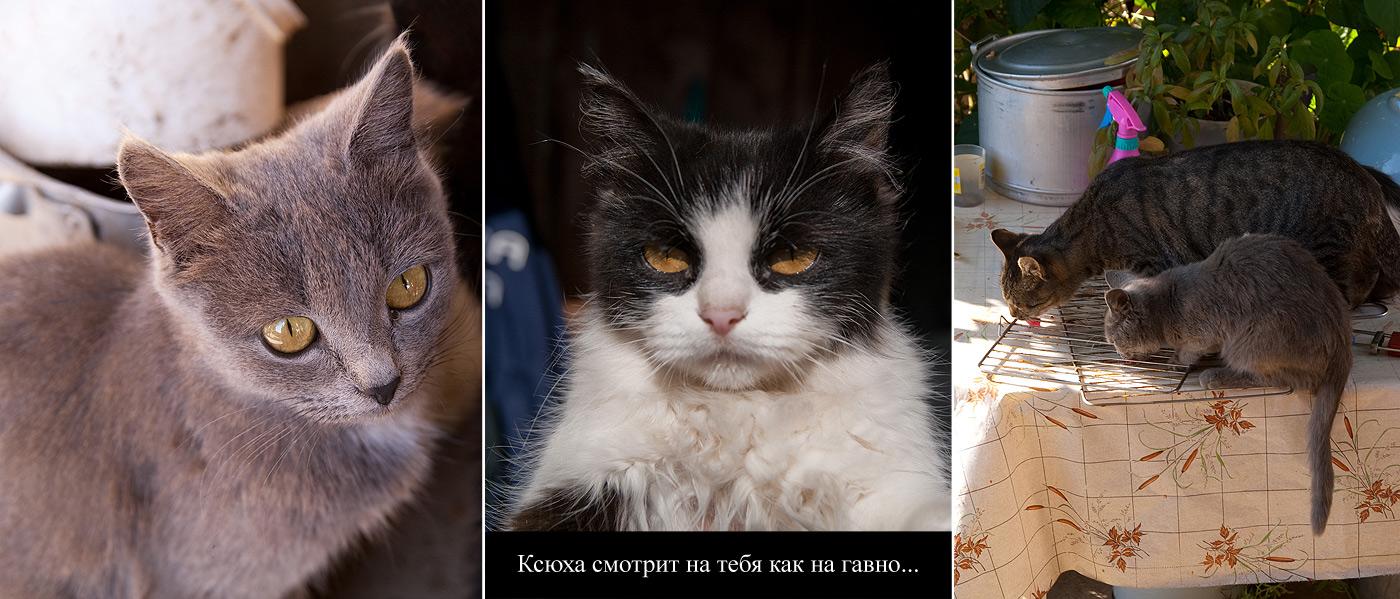 Разные кошки в кошках