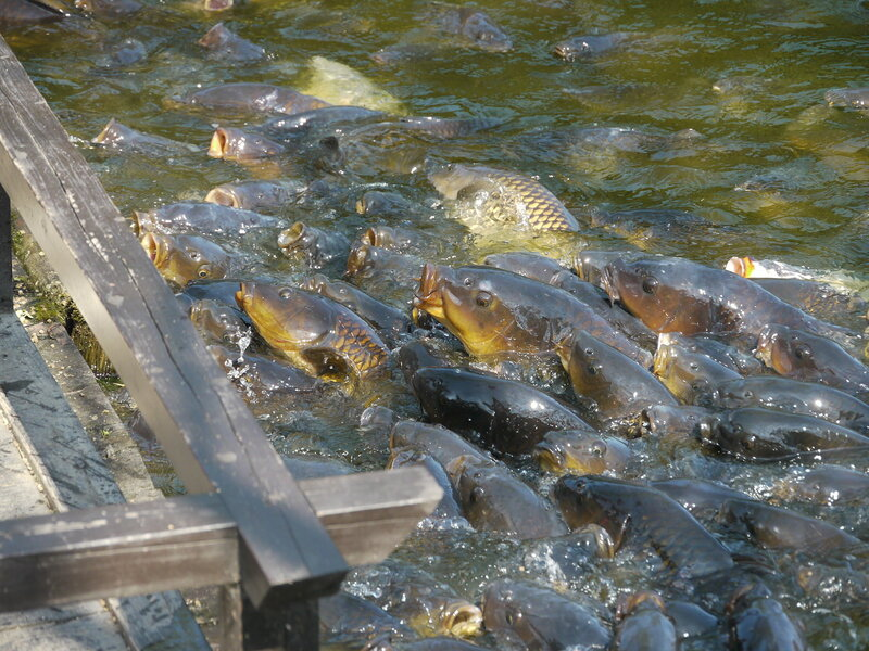 рыбу ловят в бассейне реки