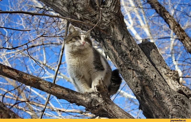 Картинка Мартовский кот
