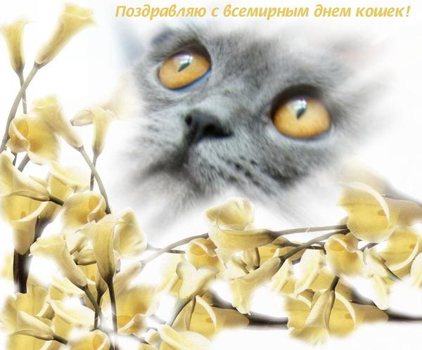 Картинка С всемирным днем кошек!