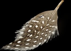 перья пятнистые