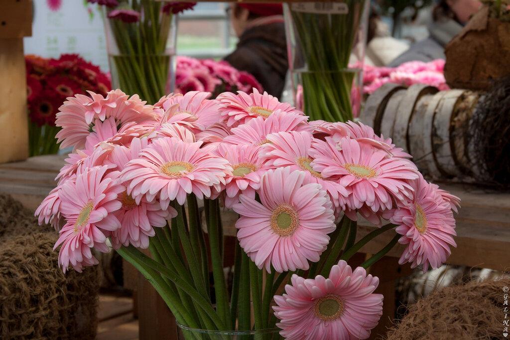 Розовое очарование