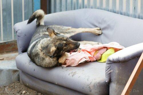 Руна собака из приюта догпорт