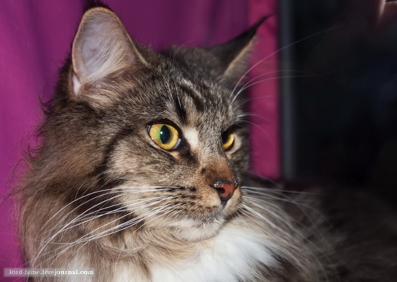 cats15.JPG
