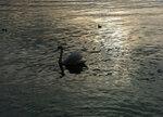 Вечер на озере Цюрих.