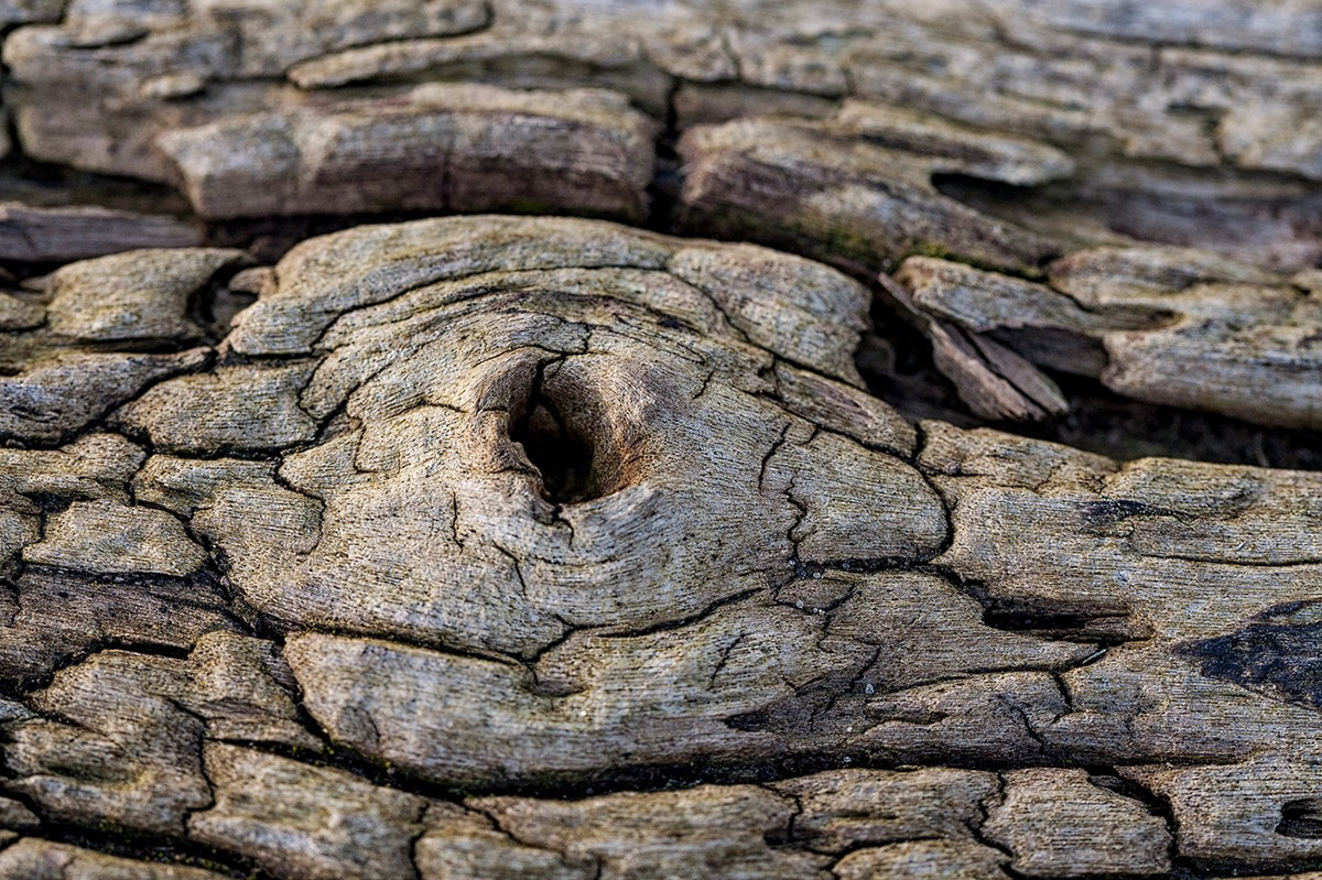 Old wood / фото Silvia Becker