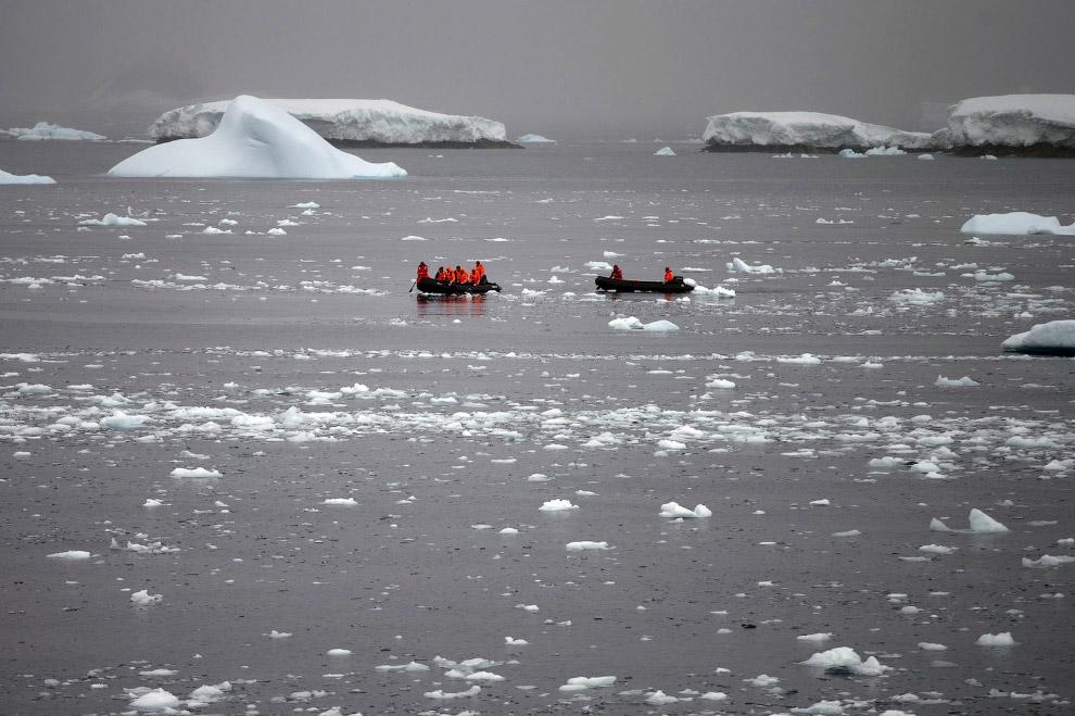 12. Остров Кинг-Джордж, Антарктида, 20 января 2015. (Фото Natacha Pisarenko | AP):