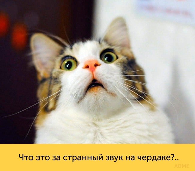 Эти кошки— настоящие королевы драмы (20 фото)