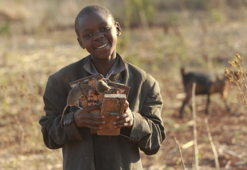 Зимбабвийский бизнес: дети ловят, жарят и продают мышей