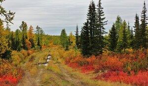 Осень прошла по дороге...