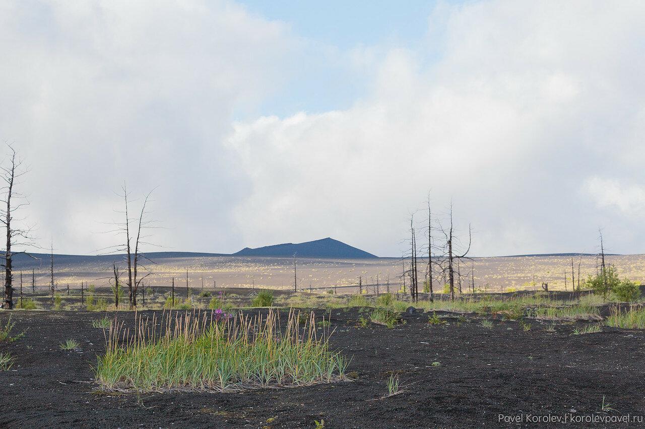 Kamchatka-173.jpg