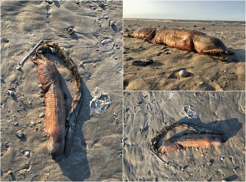Странное существо выбросило на пляж в Техасе после урагана Харви