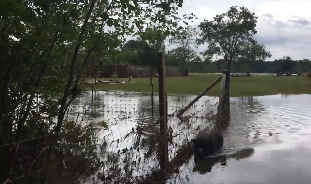 Выжившие: трогательная встреча фермера с уцелевшими после урагана животными