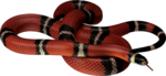 snake_PNG4087.png