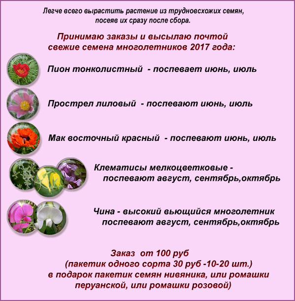 semena-OK-blog1.jpg