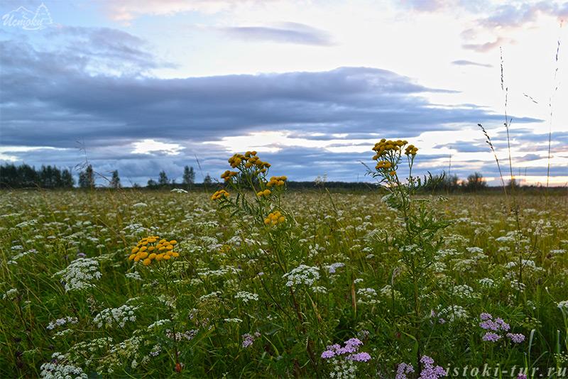 полевые_цветы_polevye_tsvety