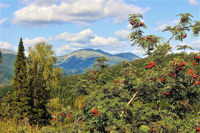IMG_7703.JPG Рябина в горах