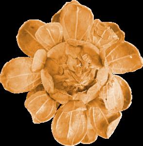 цветочки оранжевые